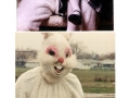 WTF Easter Bunny