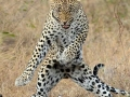 He's got the moves like..