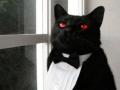 Butler cat