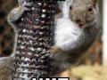 Dat Squirrel