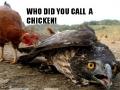 Bada$$ chicken!