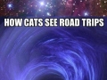 Cats and dogs on road trips