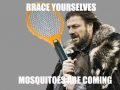 Mosquitoes are coming!