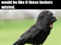 I'm starting to like birds