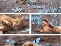 Kitty with butterflies