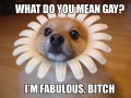 I'm just fabulous!