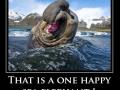 Happy sea elephant
