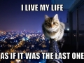 Cats and their lives