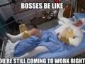 Bosses be like..