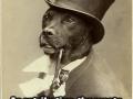 Old Money Dog