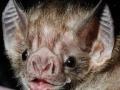 Good Guy Bat