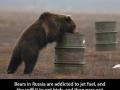 Russian bears