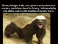 Honey badger doesn't care!