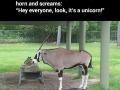 Look, it's a unicorn!