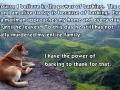 Power of barking