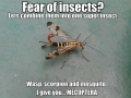 Fear of insects?