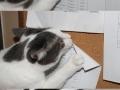 This cat is evil!