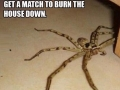 Scariest spider ever
