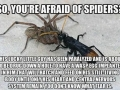 Afraid of spiders?