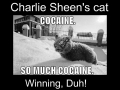 Charlie Sheen..Cat version