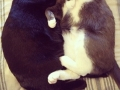 Cats that love each other