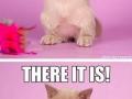 I'm a kitty!
