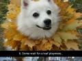 Dogs love autumn!