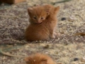 Extremely cute kittens