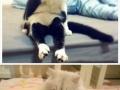 Cats sitting like humans