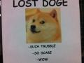 Lost Doge