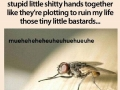 These scumbag flies!