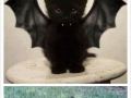 Cute Halloween Kittens