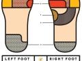Foot Science