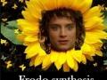 Frodo-synthesis