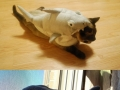 Cats in shark costumes