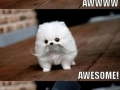 Awww to awesome
