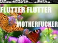 Butterflies are a**holes