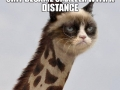 Grumpy Catraffe