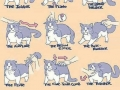 How to treat your cat
