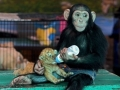 Just Monkey & Tiger