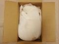 Shipping cat to tuna factory