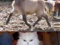 Funny half shaved animals
