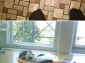 Proof cats are liquids