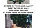 Why I like cats