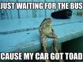 Pun toad