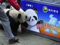 Panda Recognizes Cartoon