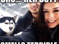 Jealous Husky