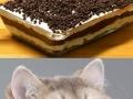 Chocolate motherf**ker