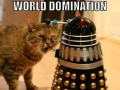 'Cats'
