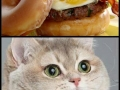 Donut bacon burger